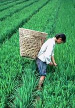 Agrucultura in lume - referat