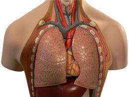 Aparatul respirator si fiziologia respiratiei