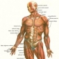 Articulatia scapulo-humerala