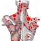 Articulatiile centurii scapulare