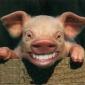 Barbatii porci - mit sau legenda vie