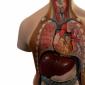 Cauzele imbolnavirii aparatului respirator
