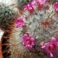 Cresterea cactusilor