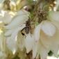 Cum scapam de insectele si sobolanii nedoriti din case si gospodarii