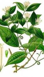 Curara, otrava curioasa a Amazoanelor