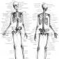Despre alcatuirea scheletului