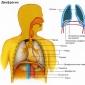 Despre respiratie