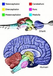 Despre sistemul nervos