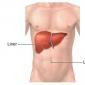 Fiziologia ficatului