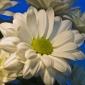 Florile ne infrumuseteaza apartamentul