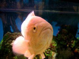 Masuri de prevenire a imbolnavirilor pestilor de acvariu