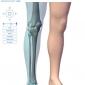 Muschii gleznei si piciorului- intrinseci plantari