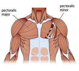 Muschii scapulari ai umarului scapulohumeral