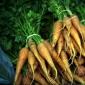 Pastrarea morcovilor pentru iarna