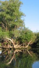 Referat - Delta Dunarii