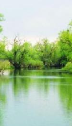 Referat despre Delta Dunarii