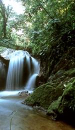 Referat despre Padurea Amazoniana