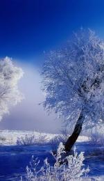 Referat despre Pastel: Iarna de Vasile Alecsandri