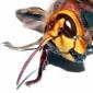 Rolul Insectelor in Prognoza Timpului