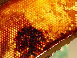 Veninul de albine este bun pentru sanatatea noastra