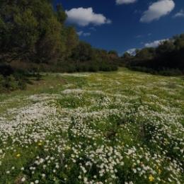 Clima si apele Podisului Dobrogei de Sud