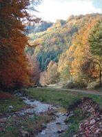 Dealurile si Campia de vest ale Romaniei