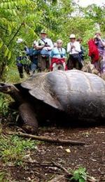 Insulele Galapagos, Insulele Broastelor Testoase