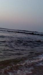 Marea Sargaselor