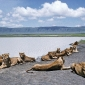 Ngorongoro, paradisul al faunei africane